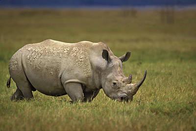 Rhinoceros Photograph - Kenya, Lake Nakuru National Park by Jaynes Gallery