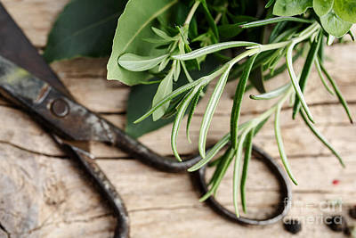 Cord Photograph - Kitchen Herbs by Nailia Schwarz