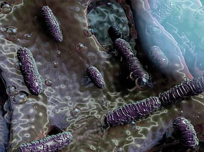 Bacteria Photograph - Klebsiella Oxytoca Bacteria by Hipersynteza