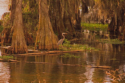 Photograph - Lake Martin Louisiana by Ronald Olivier