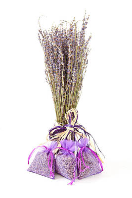 Therapeutic Photograph - Lavender by Tom Gowanlock