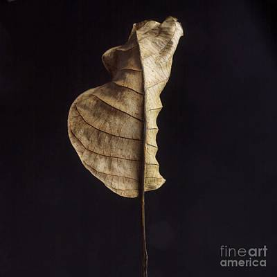 Leaf Art Print by Bernard Jaubert