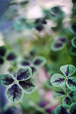 Clover Photograph - 4 Leaf Clover by Nancy Ingersoll