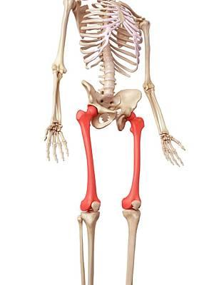 Leg Bones Art Print by Sebastian Kaulitzki/science Photo Library