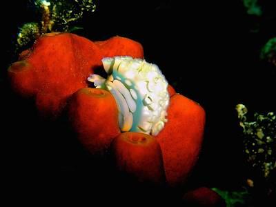 Lettuce Sea Slug Original by Nina Banks