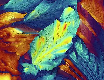 Light Micrograph Of Citric Acid Crystals Print by Alfred Pasieka