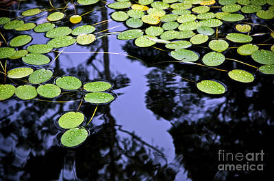 Lilly Pad Photograph - Lilly Pad Pond by Tim Hester