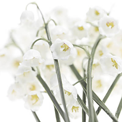 Photograph - Lily-of-the-valley Flowers  by Elena Elisseeva
