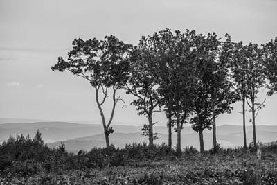Photograph - Trees At The Top by Alex Potemkin
