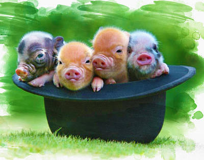 4 Little Pigs Original by Don Kuing
