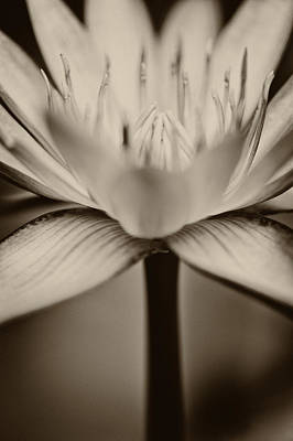 Photograph - Lotus Flower by U Schade
