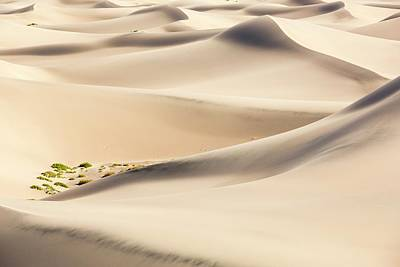 Tumbleweed Photograph - Mesquite Flat Sand Dunes by Ashley Cooper