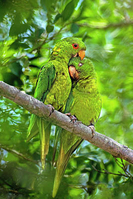 Parakeet Photograph - Mexico, Tamaulipas State by Jaynes Gallery
