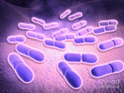 Microscopic View Of Listeria Art Print by Stocktrek Images