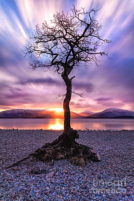 Millarochy Bay Tree Loch Lomond Art Print