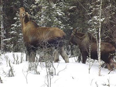 Moose Art Print by Jennifer Kimberly