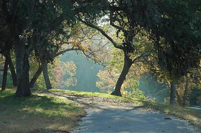 Cypress Photograph - Morning Light by Robert Anschutz