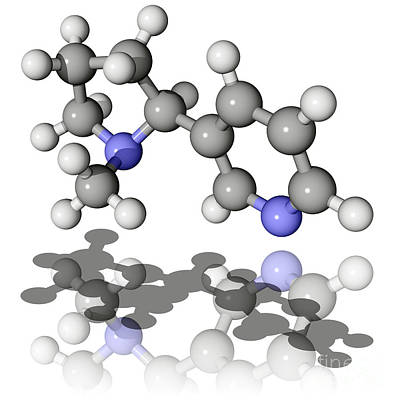 Nicotine Molecule Art Print by Laguna Design