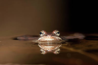 Frog Photograph - North America Usa, Central by Joe and Mary Ann Mcdonald