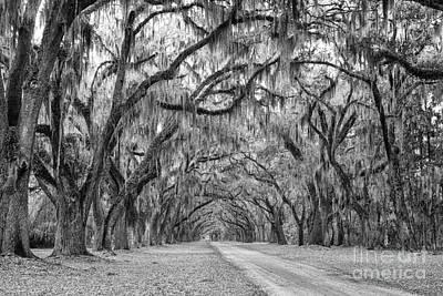 Design Turnpike Books - Oak Lined Avenue Wormsloe Plantation Savannah Georgia by Dawna Moore Photography
