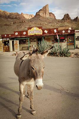 Burros Photograph - Oatman, Arizona, United States by Julien Mcroberts