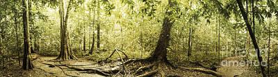 Panorama Of Rainforest Original by Atiketta Sangasaeng