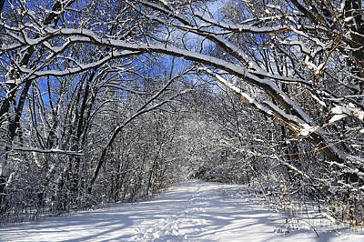 Park Scene Photograph - Path In Winter Forest by Elena Elisseeva
