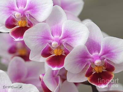 Photograph - Phalaenopsis Orchid Named Be Tris by J McCombie