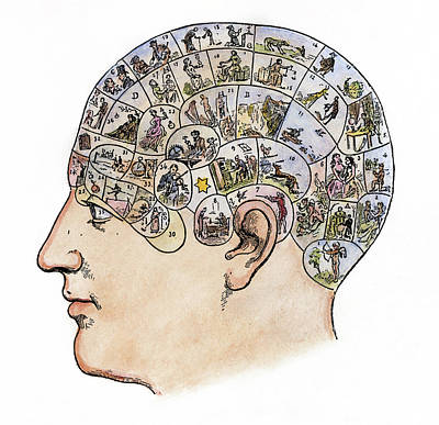 Psychology Painting - Phrenology, 19th Century by Granger