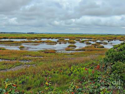Photograph - Plum Island by Marcia Lee Jones