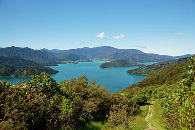 Queen Charlotte Track, Marlborough Art Print by Douglas Peebles