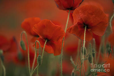 Wall Art - Photograph - Red by Nailia Schwarz