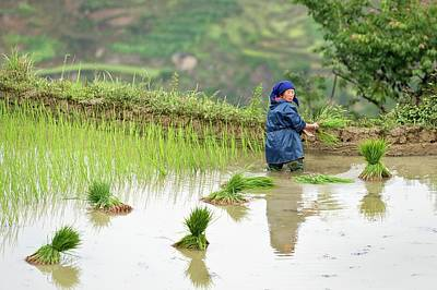 Rice Cultivation In Yunnan Province Art Print by Tony Camacho