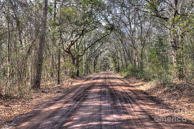 Photograph - Road To Angel Oak by Dale Powell