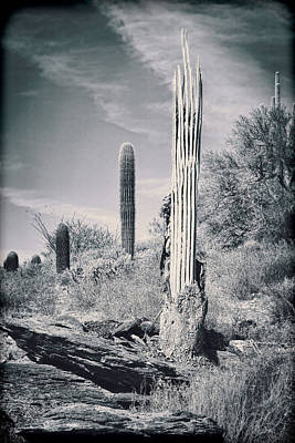 Saguaro Skeleton Art Print