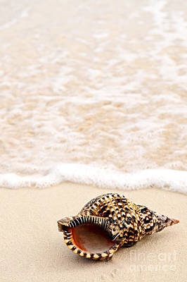 Seashore Photograph - Seashell And Ocean Wave by Elena Elisseeva