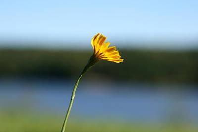 Photograph - September Sun  by Neal Eslinger