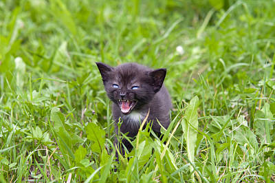 Raging Photograph - Small Kitten In The Grass by Michal Boubin