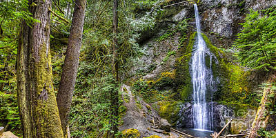 Forest Photograph - Sol Duc Falls by Twenty Two North Photography