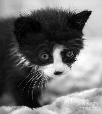 Moody Trees - Spotted Black and White Kitten by Iris Richardson