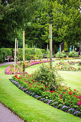 Begonia Photograph - Summer Garden by Tom Gowanlock