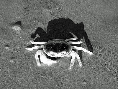 Sand Fences Drawing - Sunning Sand Crab by Joseph Hendrix