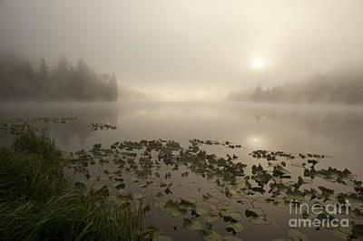 Thomas Kinkade - Sunrise lake in fog with trees shrouded in mist  by Jim Corwin