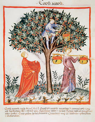 Three Trees Photograph - Tacuinum Sanitatis, Medieval Health by Prisma Archivo