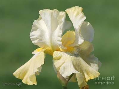 Tall Bearded Iris Named Again And Again Art Print by J McCombie