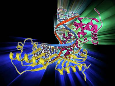 Molecular Structure Photograph - Tata Box-binding Protein Complex by Laguna Design