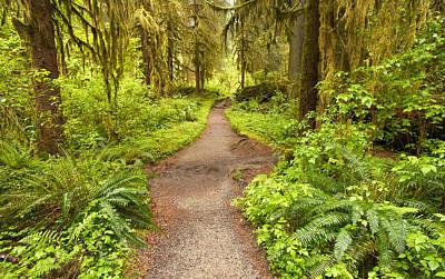 Photograph - Trail by Byron Jorjorian