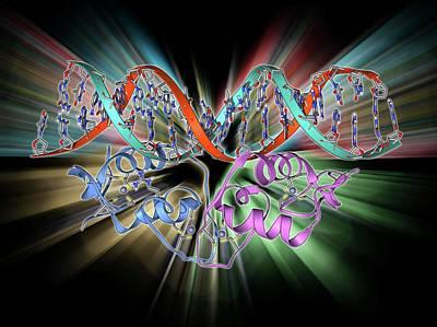 Molecular Structure Photograph - Transcription Factor And Dna Molecule by Laguna Design