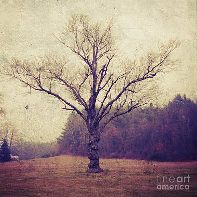 Gnarly Photograph - Tree by HD Connelly