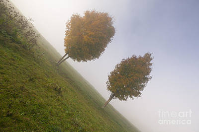 Whimsically Poetic Photographs Rights Managed Images - Two maple trees on a foggy autumn morning Royalty-Free Image by Don Landwehrle